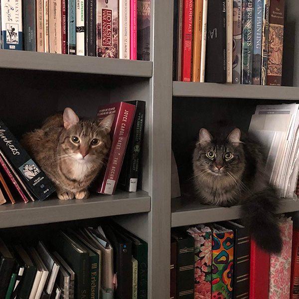 Donut and Tiger Feather on the bookshelf